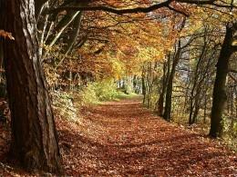 Herbstwald in Deutschland