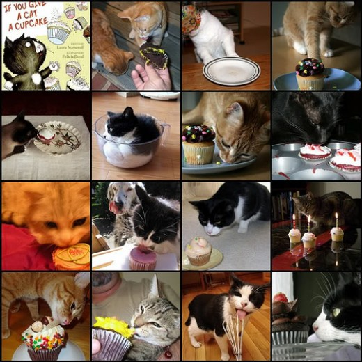 Cats and Cupcakes!