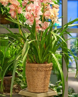 Rope Crafts include this rope-covered flower pot. Photo Credit:  MarthaStewart.com.