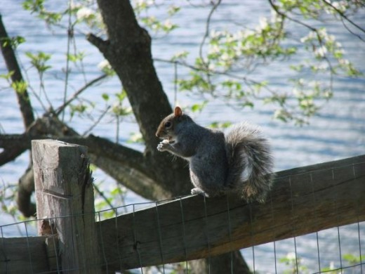 Squirrels are like relatives in your family. Some you see now and then and it's fun to say Hi and know it was nice to see them.