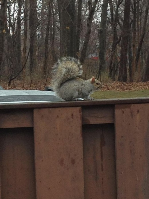 Squirrel Comes To Visit