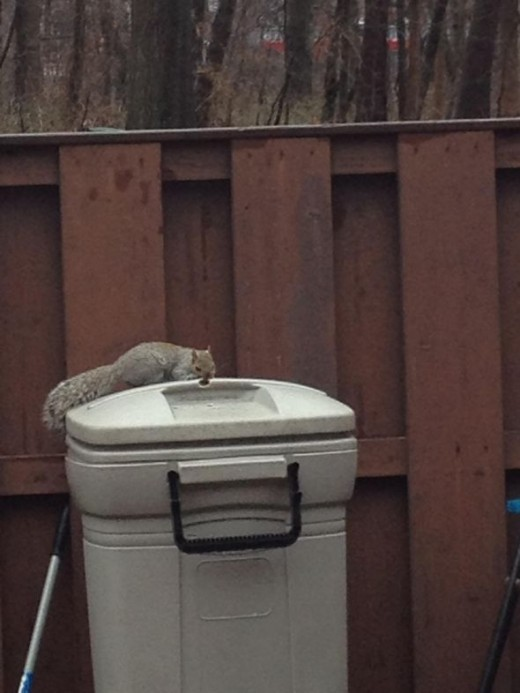 Squirrel Finds A New Seat