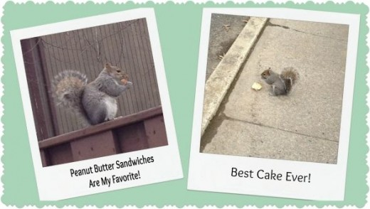 Squirrel Adventure Photo Diary