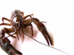 crayfish-pond