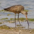 Birdwatching in Southeastern Arizona