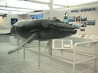 House of the Whale Museum