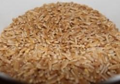 Organic Khorasan Sourdough
