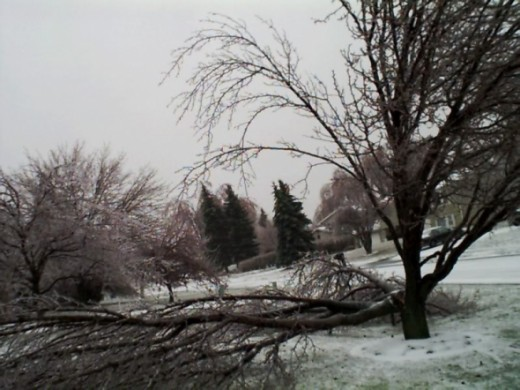 Our neighbor poor tree.  It was removed shortly after the storm ended.