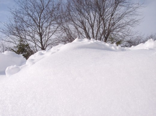 Taken 2009 after 6 inches of snow.