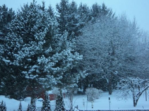 Snowy Dark day in Henrietta, New York