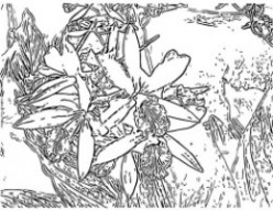 Free Orchid Flower Coloring Pages