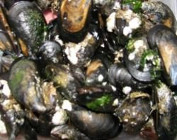 wild blue mussels