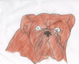 Free bulldog coloring pages