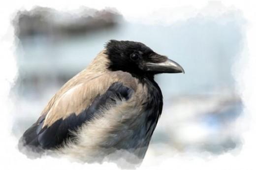 The Crow Bird