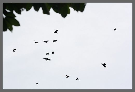 The Crow Birds
