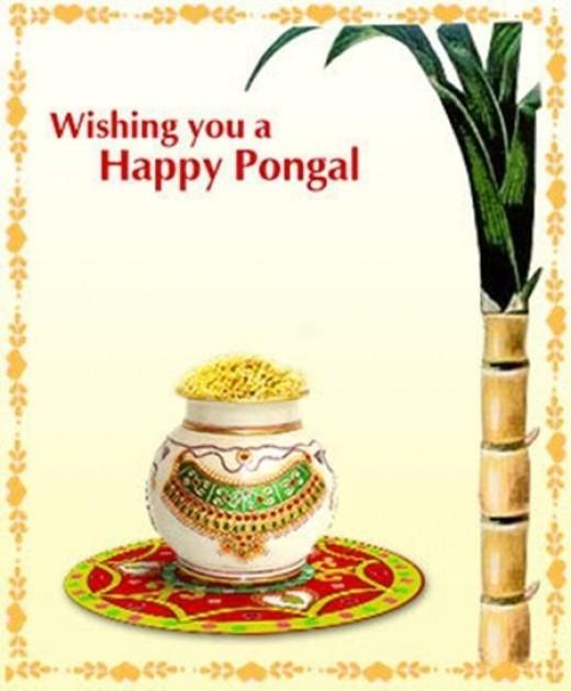 Pongal Greeting
