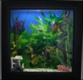 Top 5 Wall Mounted Fish Tanks & Aquariums