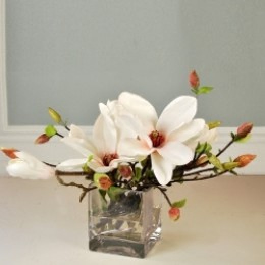 Tree Magnolias:image JS Botanicals
