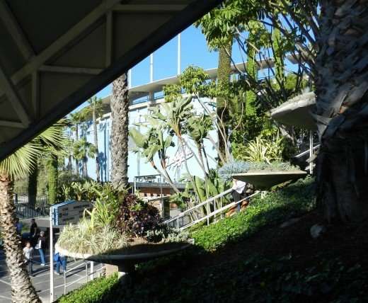 We are riding new of the new escalators. Old growth palm, ivy and big round planters.
