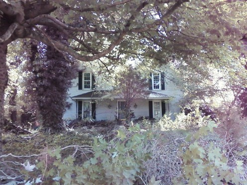 This is what the house looks like from the street in the summer time. If you didn't know it was there then would never see it as you drive by.