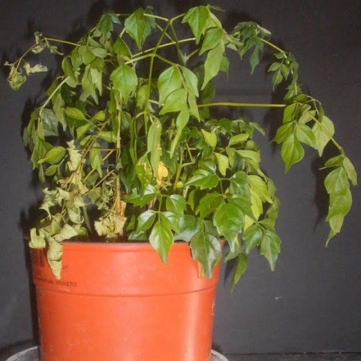 6 Ways How To Save Your Plant From Dying Hubpages