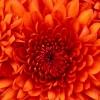 Mel92114 profile image