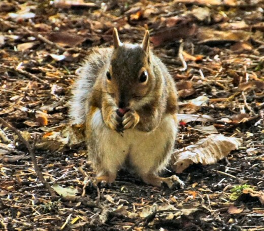 Squirrels and nuts go together.