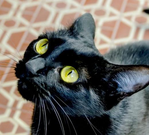 I'll catch you, Cat Dancer!