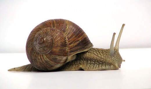 A mollusk has3 Main Body Parts: A Foot, Mantle, and Visceral Mass