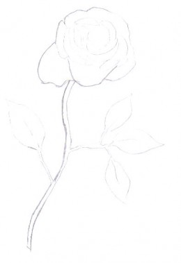 The rose drawing takes a little bit more shape.