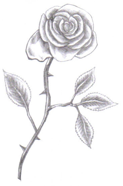 Final pencil drawing of our rose.