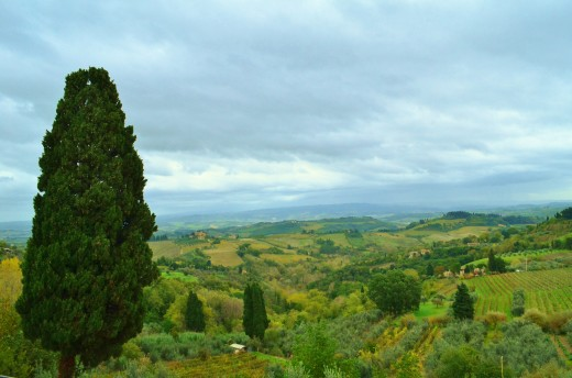 The Classico Chainti vineyards.