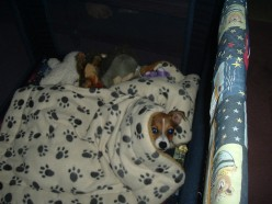 My Jack Russell Terrier is a Spy:  Living With a Dog That Loves to Burrow