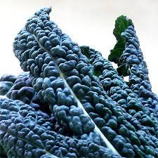 Fresh Kale Leaves
