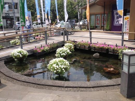 A beautiful pond outside.