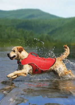Lifejackets for your dog