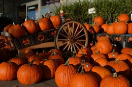 You and your children can have a lot of fun going to a pumpkin patch to pick out a pumpkin to make a Jack O Lantern.