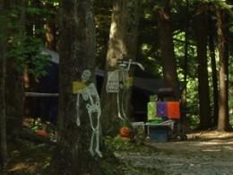 Dead Man Trees