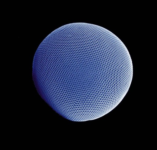 Compound eye of an Antarctic krill.