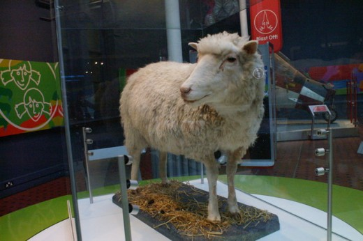 Dolly the sheep, National Museums of Scotland, Edinburgh