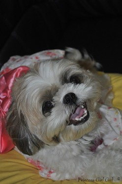 90 Cute Female Dog Names and Meanings