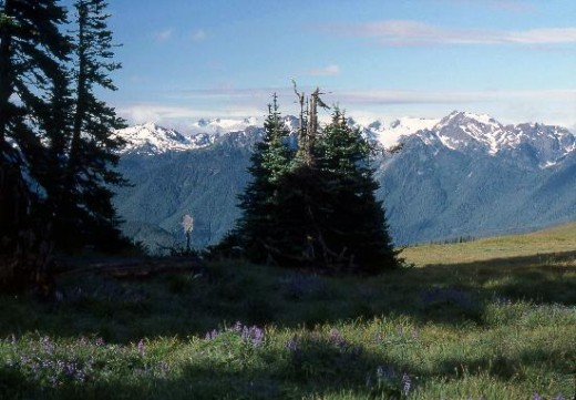 Olympic National Park Attractions