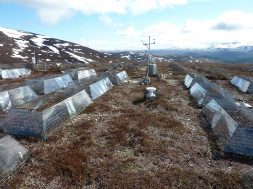 Climate Change experiment at Culardoch