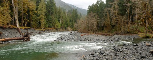 The East Fork Quinault River