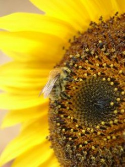 Honey, Bees and Beekeeping