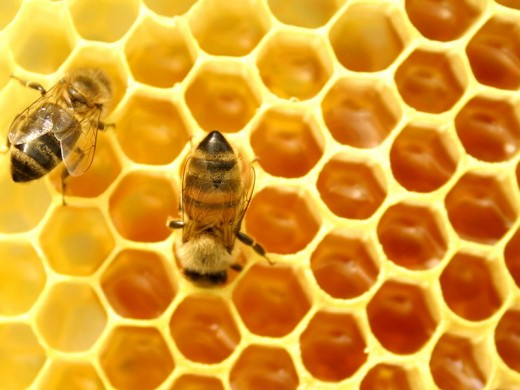 Where did all the honey bees go?