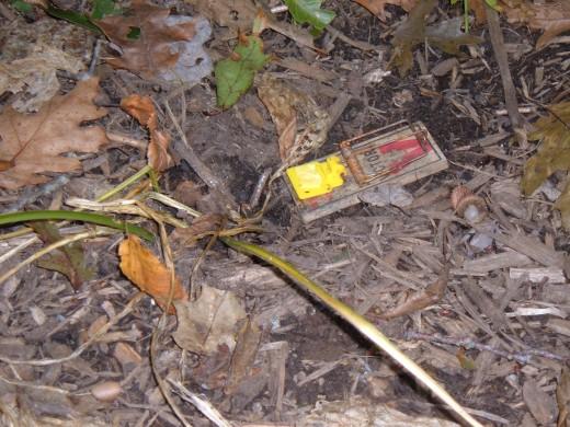 Snap Traps are effective vole deterrents
