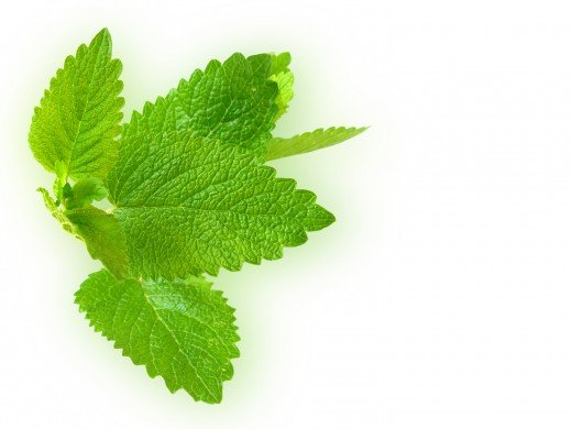 Mint is delicious with citrus fruits
