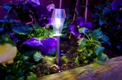 Mini solar LED garden light taking on the colour of the flowers around