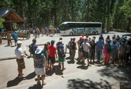 Visitors at Mariposa Grove, Yosemite National Park.